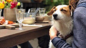 pet-dog-sat-on-owners-lap