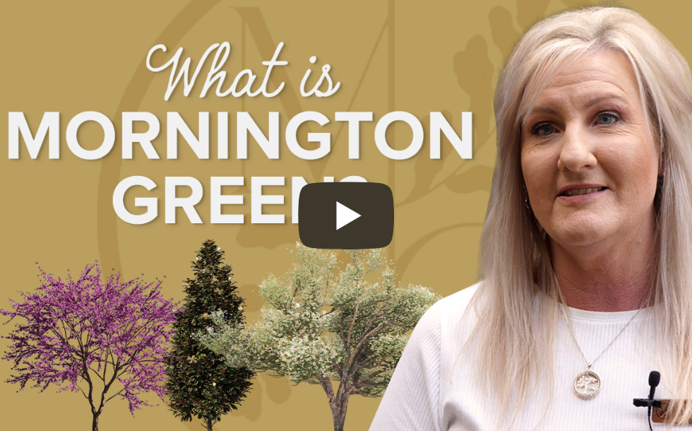 what-is-mornington-green