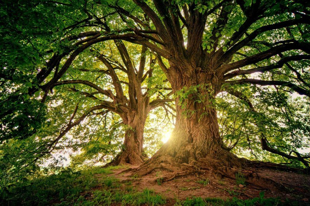 Memorial garden trees