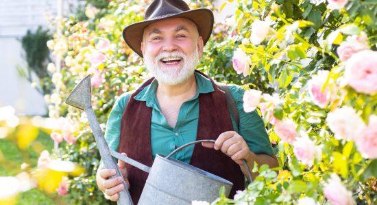 Middle aged man portrait holding watering can on roses garden. Gardening hobby. Spring gardening routine. Happy senior man gardening in the backyard garden